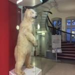 Vitrine Eisbär